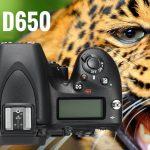 Nikon D650 Preview